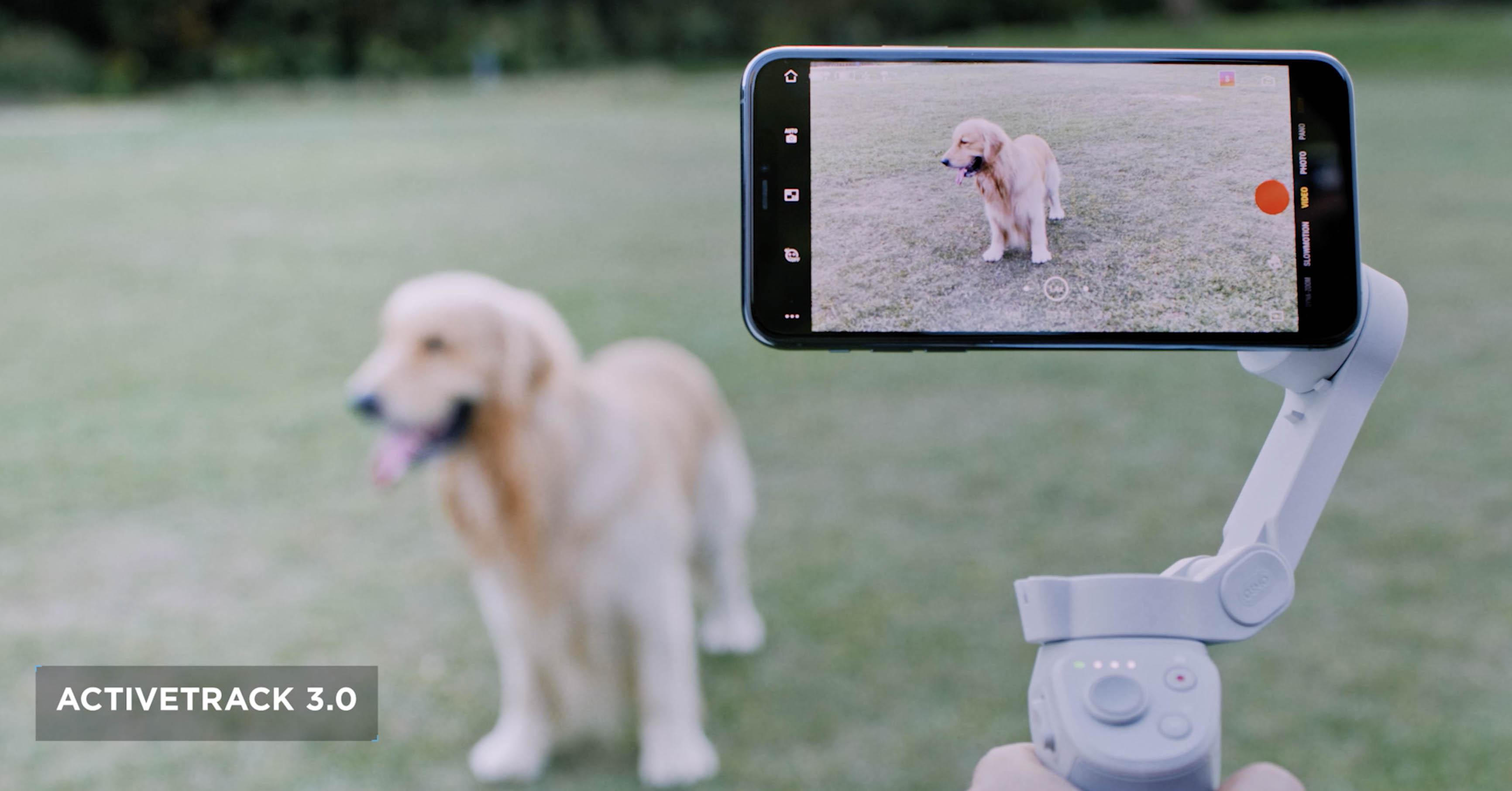 DJI OM 4 tracking pets